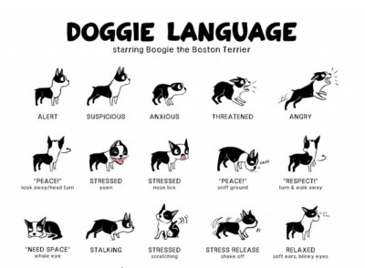 doggie-language