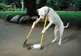 dog scooping
