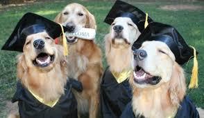 grad dogs