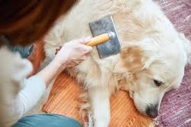 dog groom